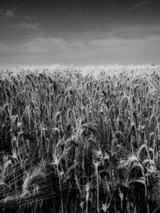 France-blé